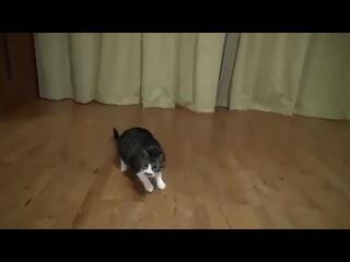 Коты-прыгуны